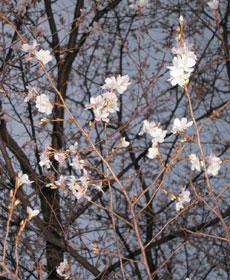 photo_200812_02