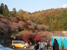 photo_20121113_03